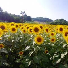 ★全部が綺麗すぎ♡♡新幹線で1時間弱!夏休みにオススメな場所はここ☺︎