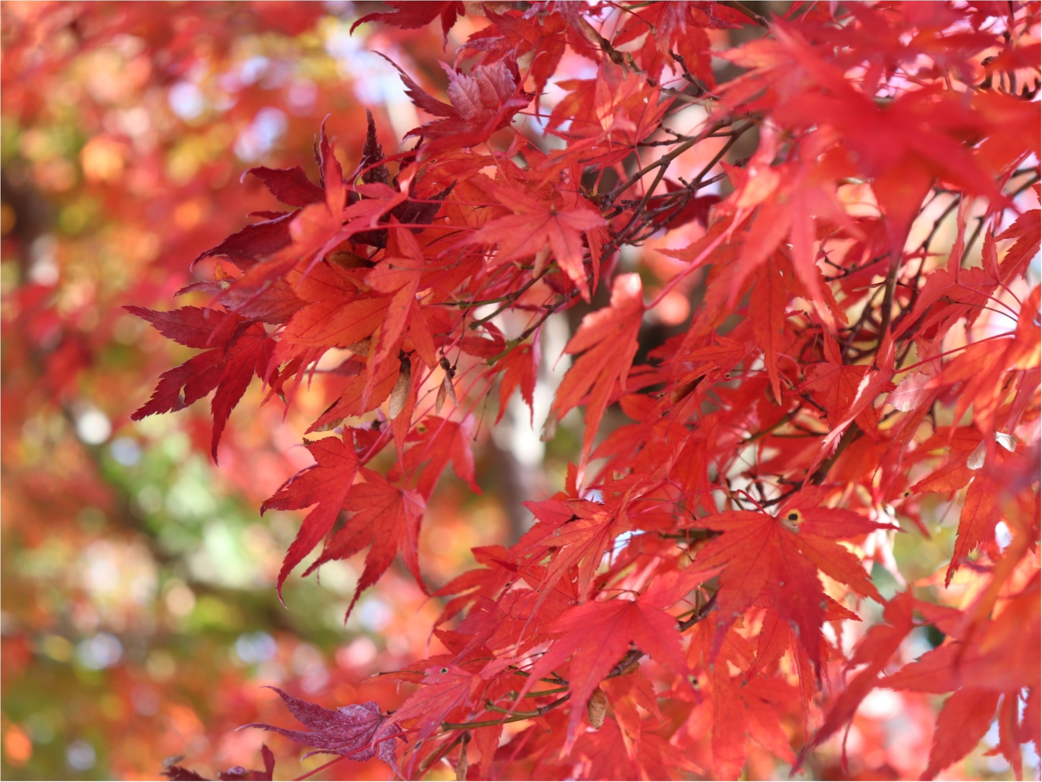 ▷2018年振り返り【秋のお出かけ】高尾山の紅葉狩りに行ってきました!!_3
