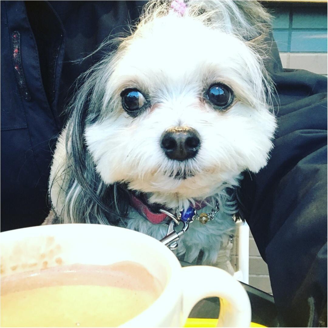 【今日のわんこ】おすまししてパチリ♪ 太郎くんはカフェでまったり中♡_1