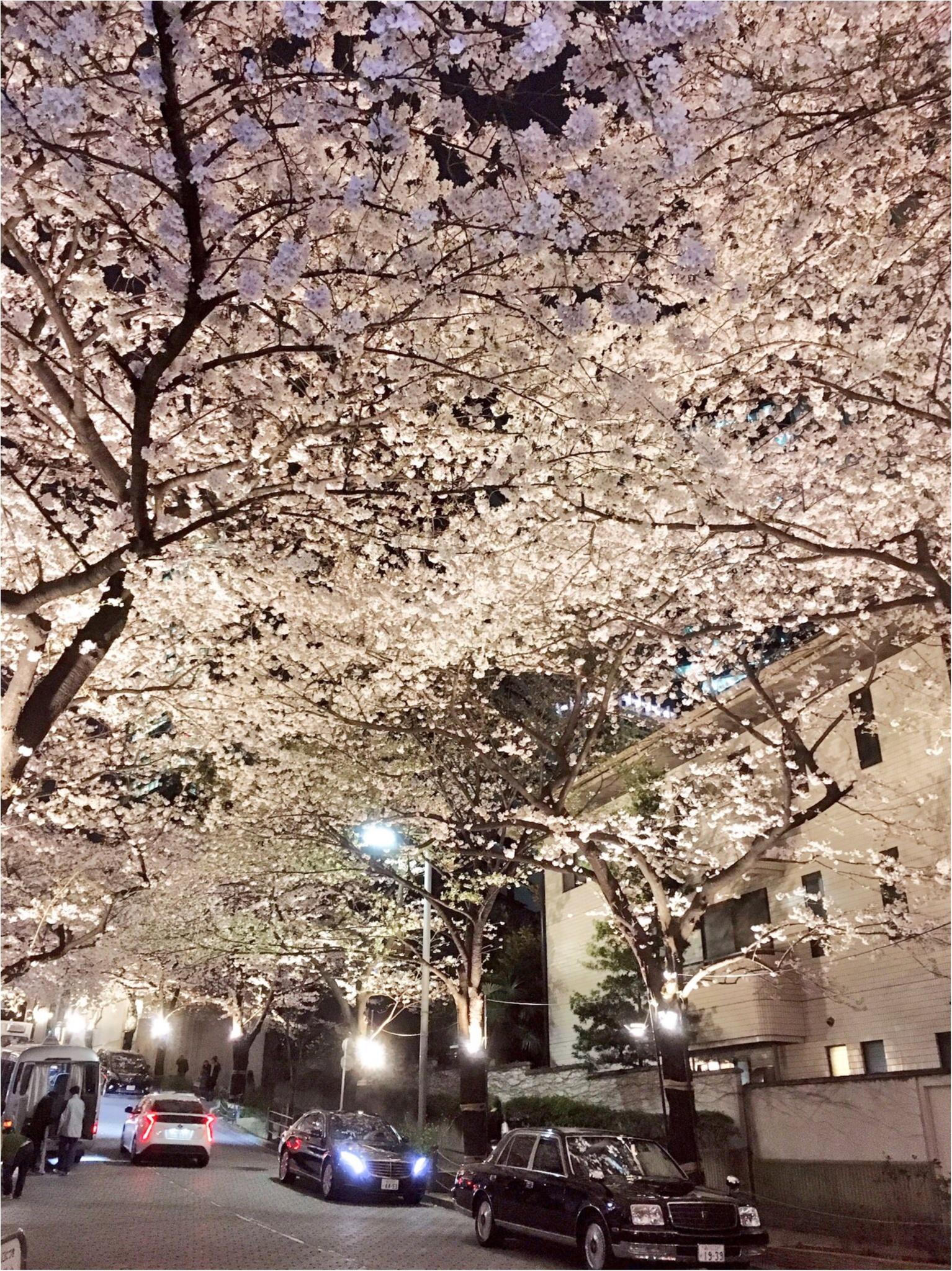 夜桜はしごしました♡六本木〜千鳥ヶ淵_6