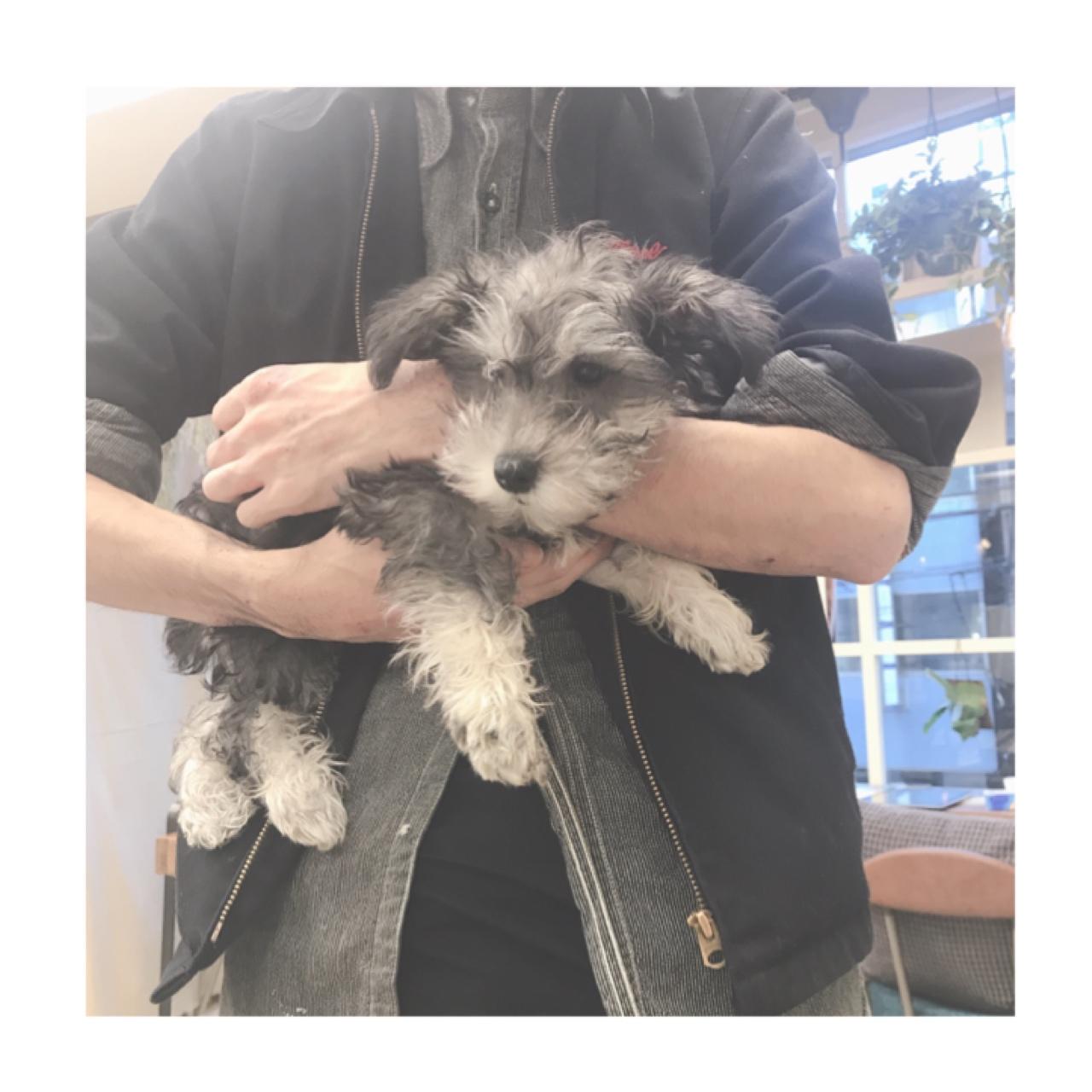 【犬のいる美容院】Gigi代々木店に行ってきた_3