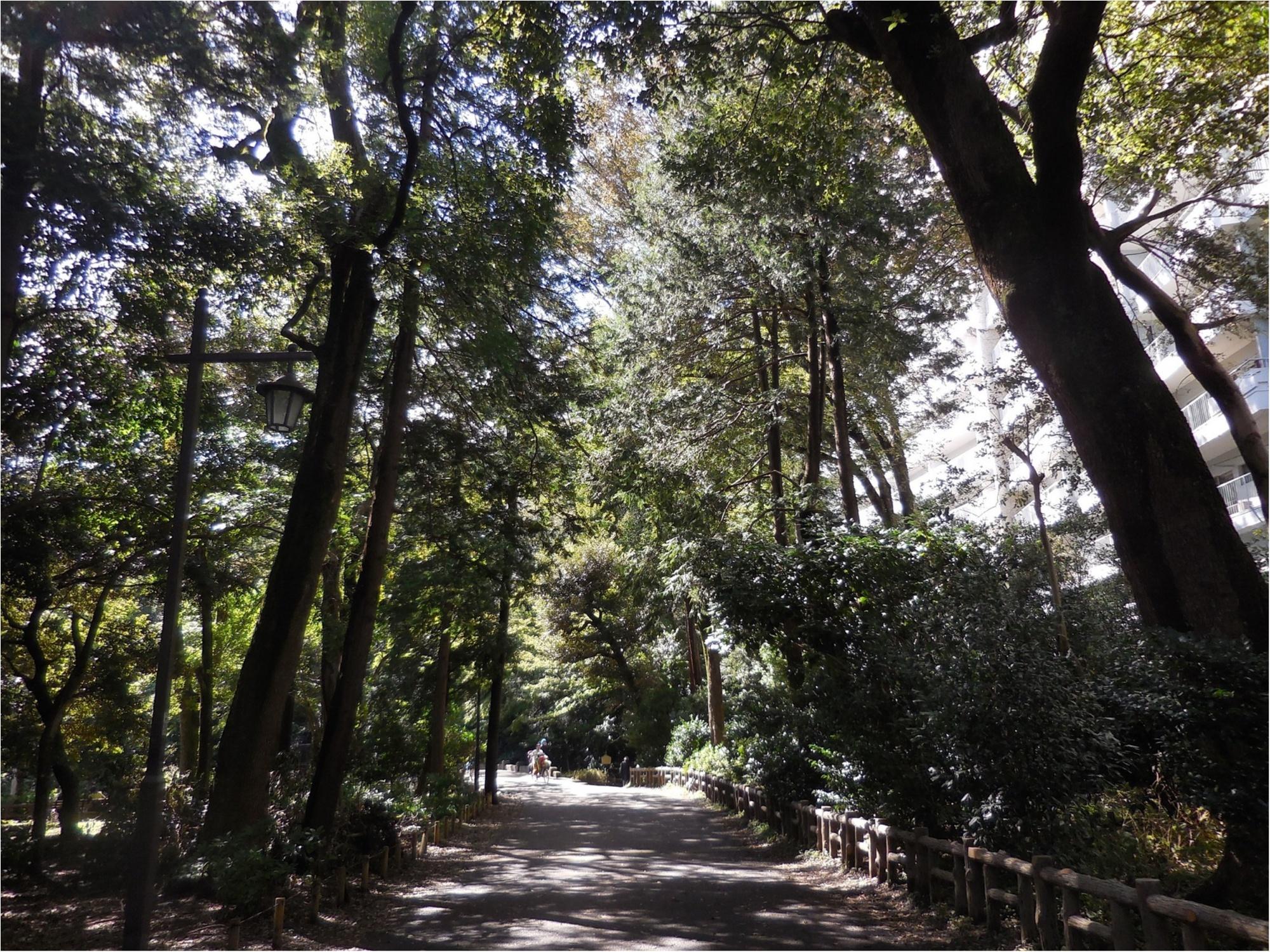 【吉祥寺井の頭公園】ひさしぶりに歩いてきました_3