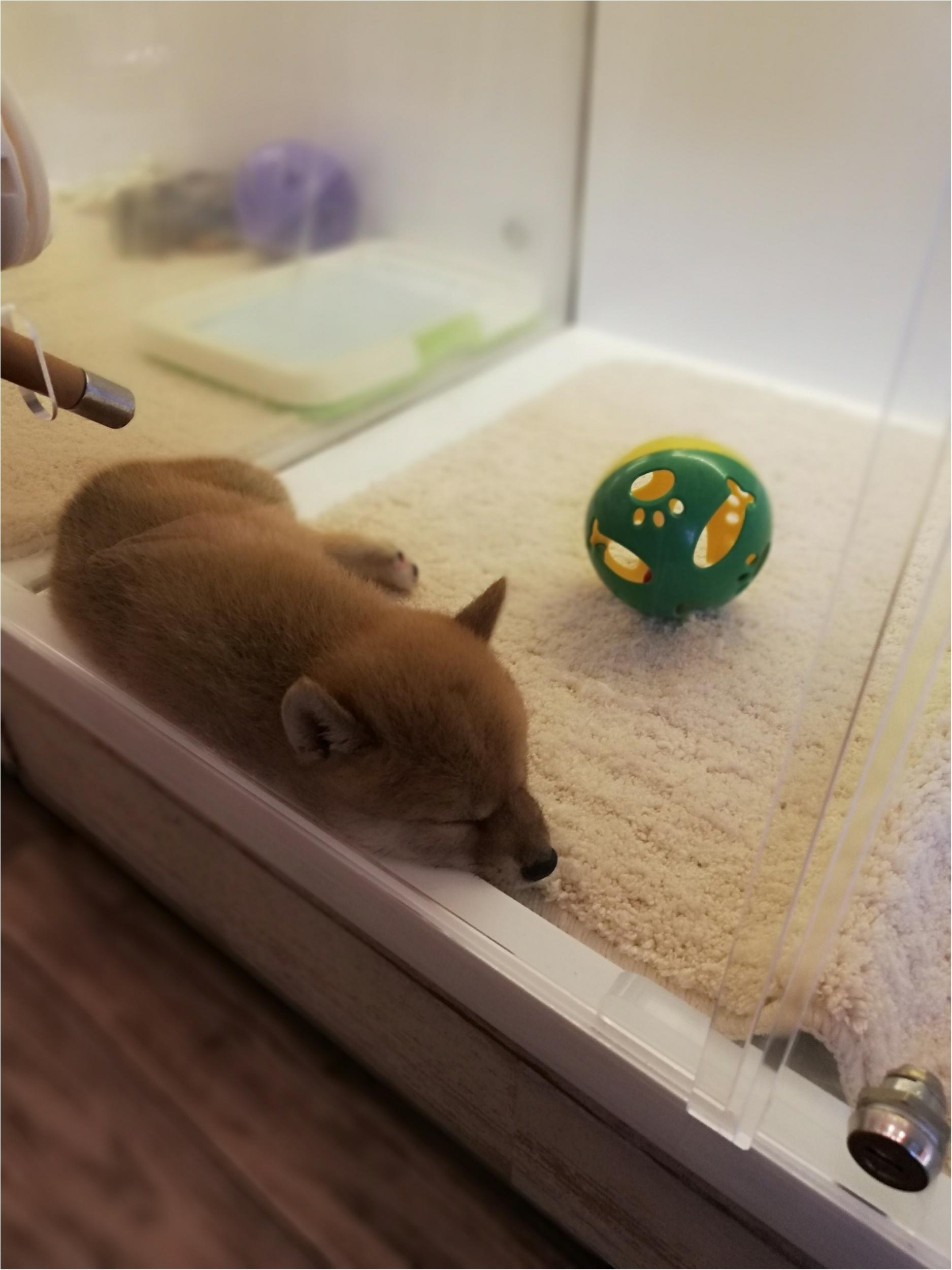 【癒し】吉祥寺のペットショップめぐり_1