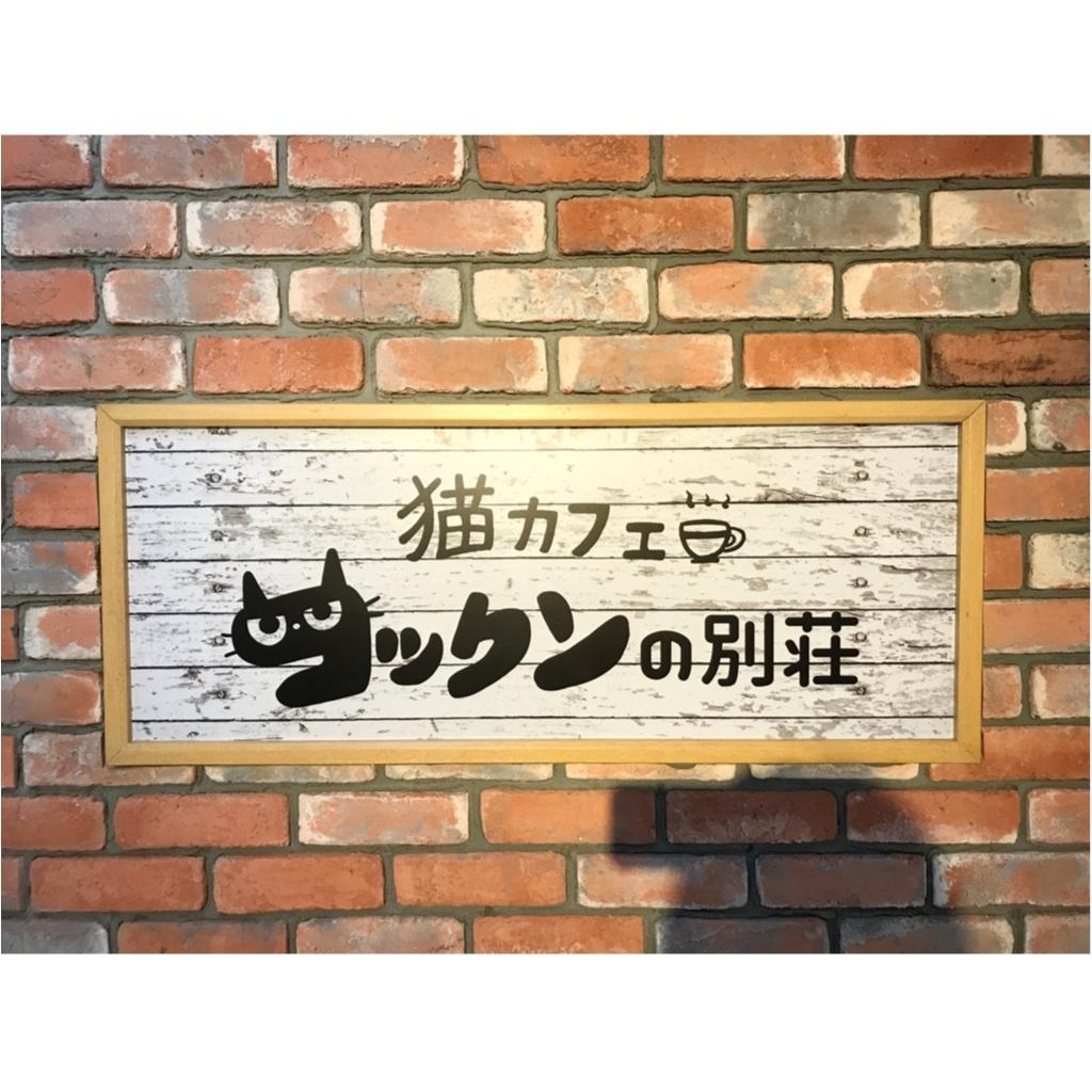 【空前の猫ブーム】首都圏内オススメの猫カフェ教えちゃいます!@横浜店レポ_1