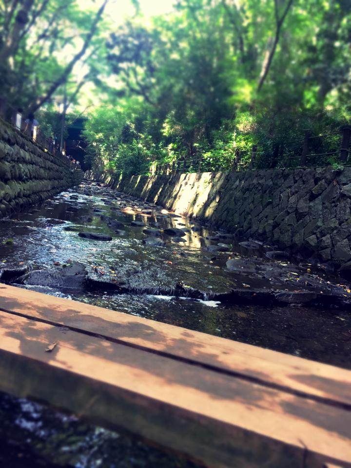 【癒しスポット】東京のオアシス。仕事に疲れたときは森林浴でリフレッシュ!_3