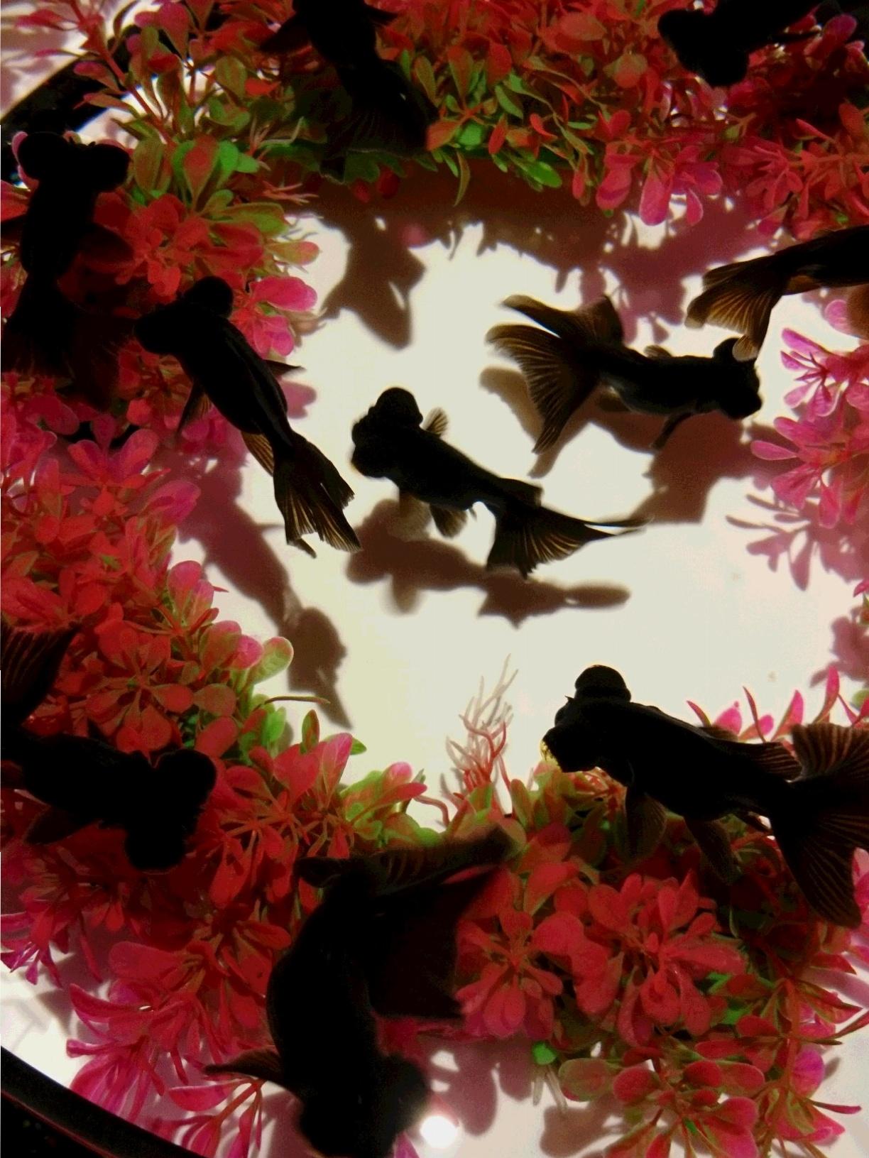 今見ておくべき!! 世界遺産・二条城【アートアクアリウム城】が豪華絢爛☆_4