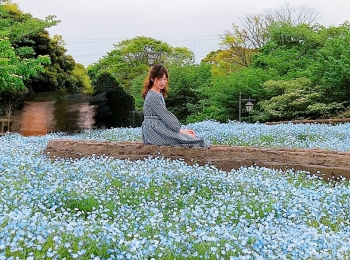 神奈川県でも見られる!ネモフィラ✿ポピー祭りも開催中!