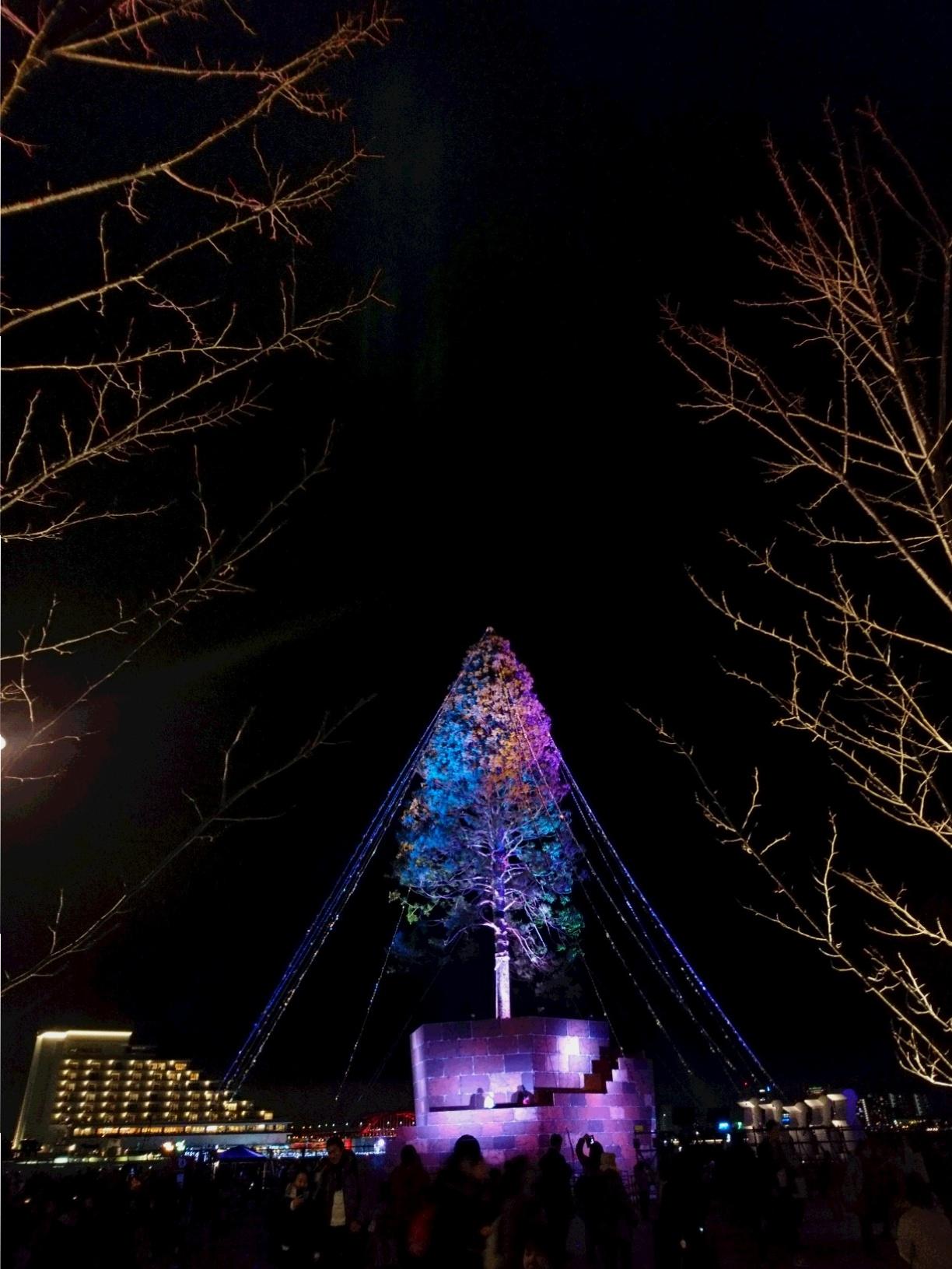 兵庫県は今、神戸がホットスポット☆ 開港150周年&世界一のクリスマスツリー ☆_1