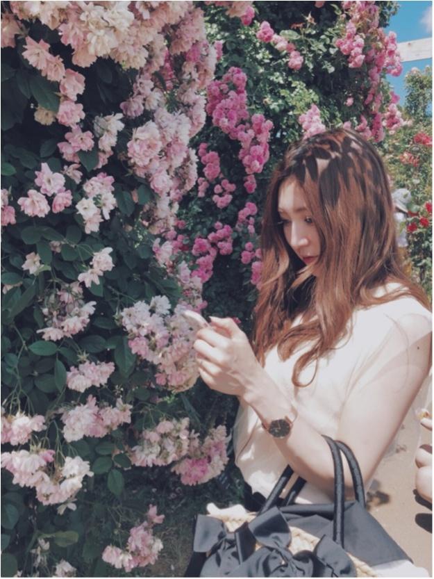 ◆◇…千葉県にある「京成バラ園♡」へ行ってきました!!ピンク色のアイスクリームも…?♡_5
