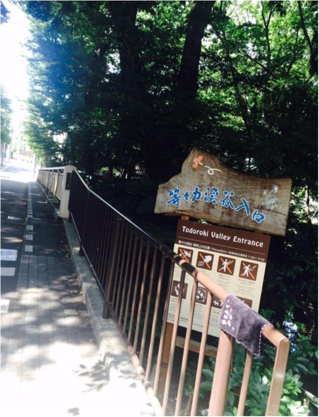 【癒しスポット】東京のオアシス。仕事に疲れたときは森林浴でリフレッシュ!_1