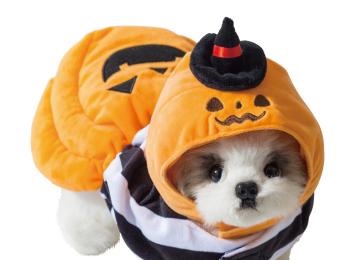 愛する犬・猫と楽しむハロウィン♡ 『3COINS』で買えるおすすめペットコスプレ8選