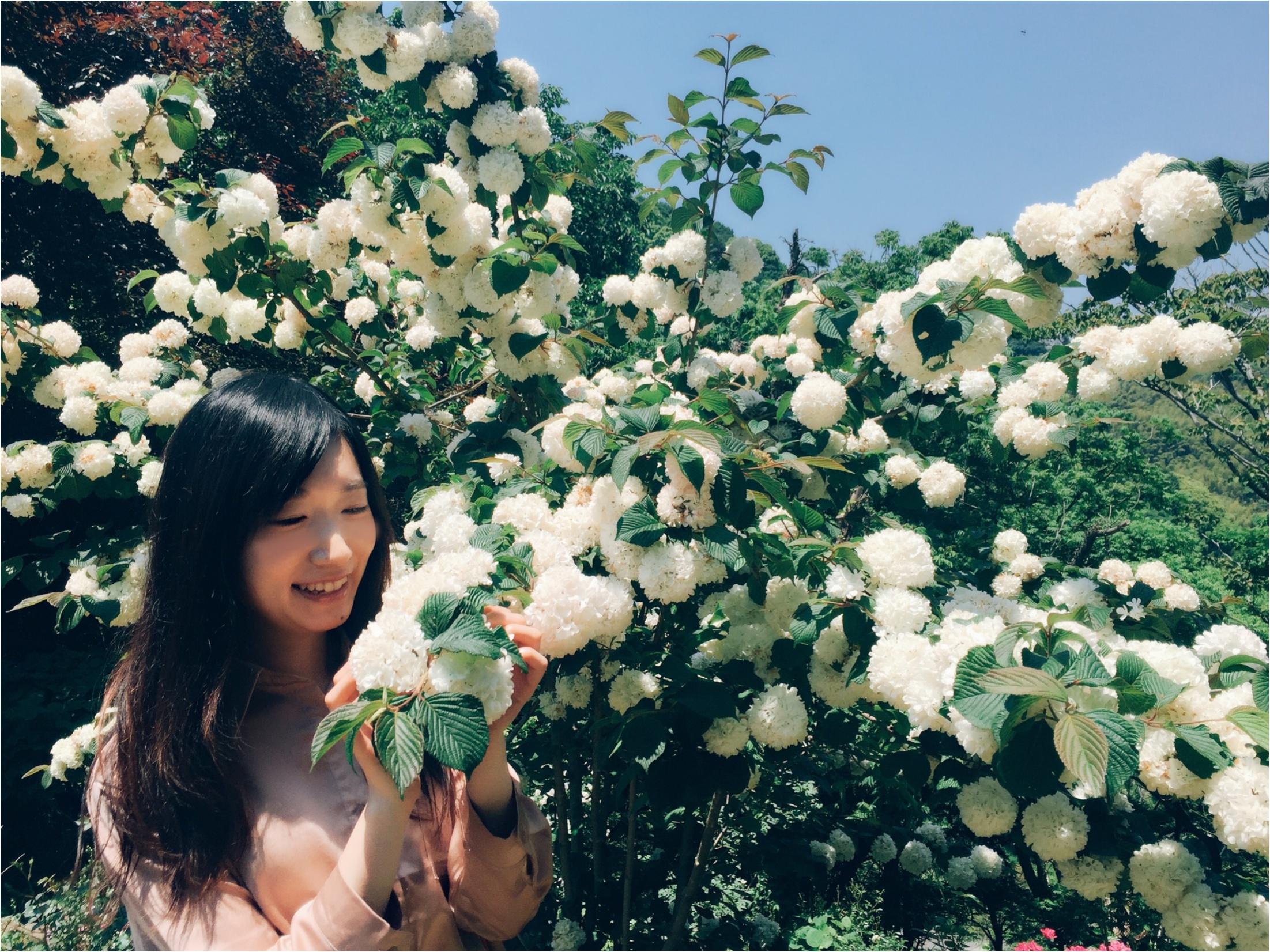 【お出掛けスポットin熱海】今が見頃のローズガーデン!薔薇のトンネルにうっとり…♡_16
