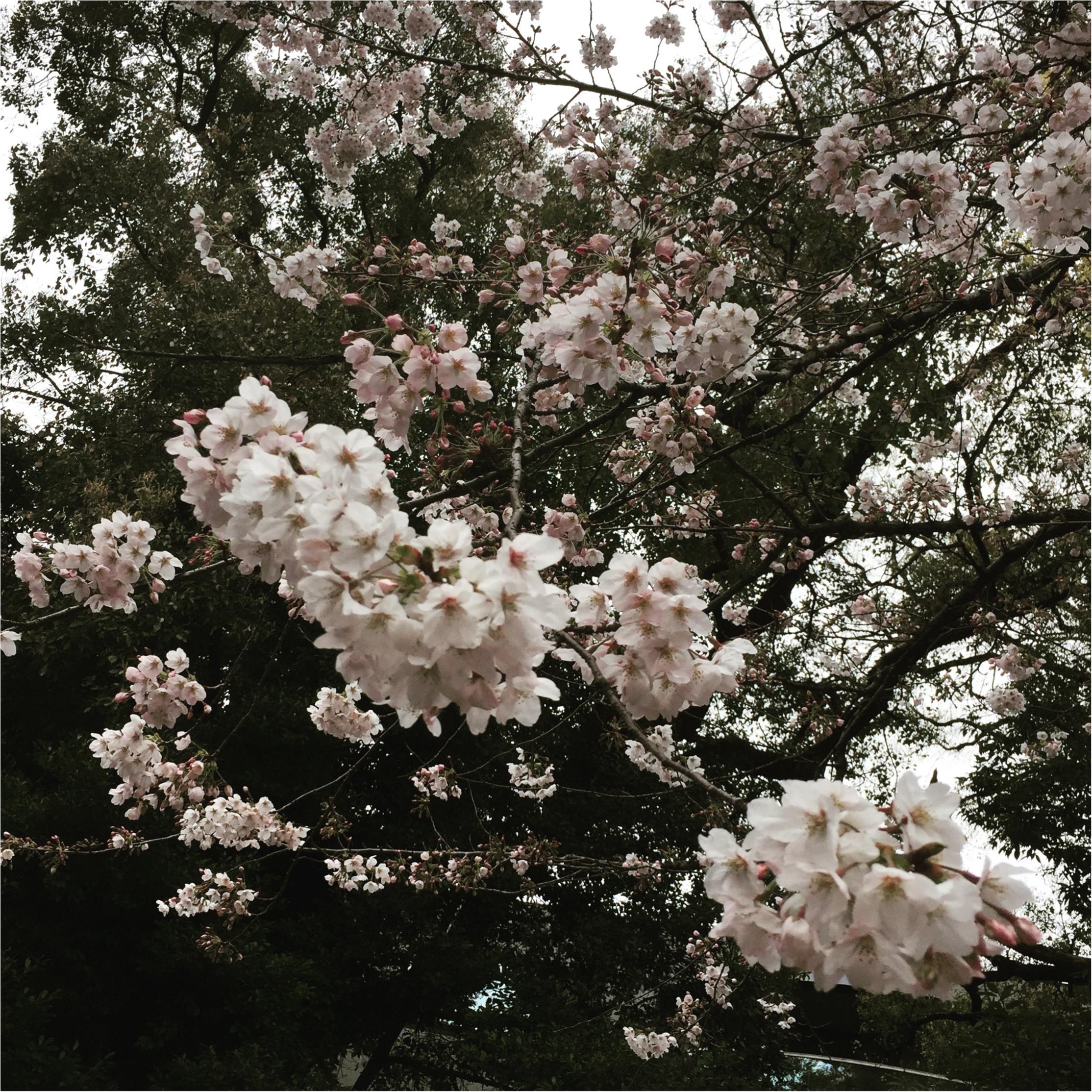 【4/6まで】都内でも七分咲き♪♪*千代田のさくらフェスティバル*に行ってきました✨✨_2