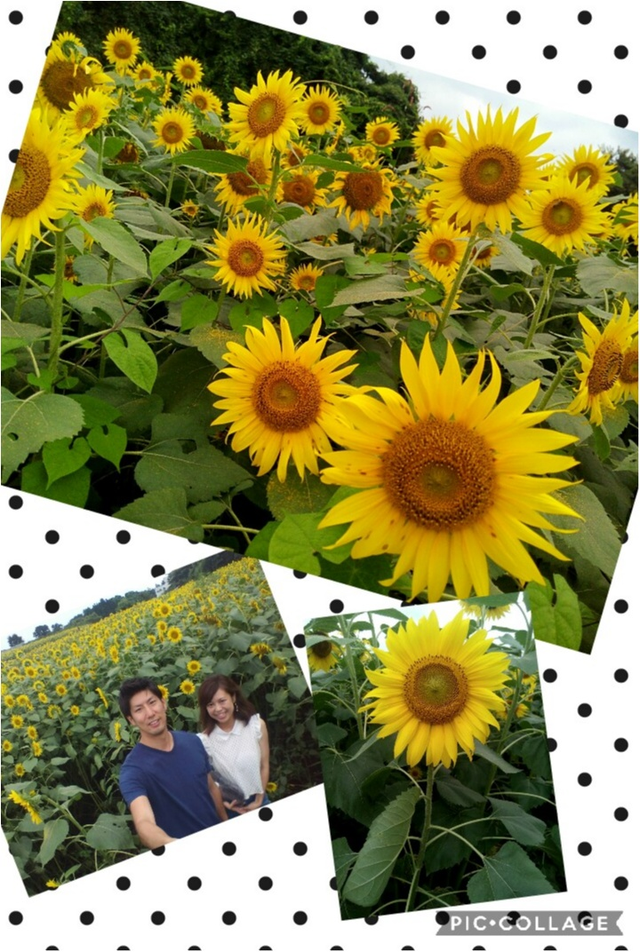 今週末のお出かけに【ひまわり畑】夏のお花といえば!気持ちも明るくなれちゃう_2