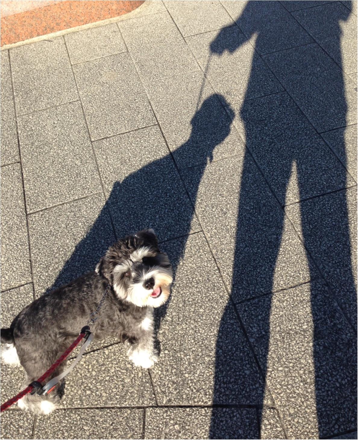 【今日のわんこ】お散歩中のサクラちゃんは、長い影が気になる!_1
