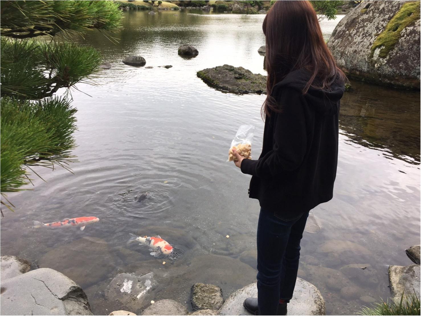 【動画で紹介!】熊本市内に発見! SNS映えする美しい庭園「水前寺成趣園」でリフレッシュ!【#モアチャレ 熊本の魅力発信!】_4