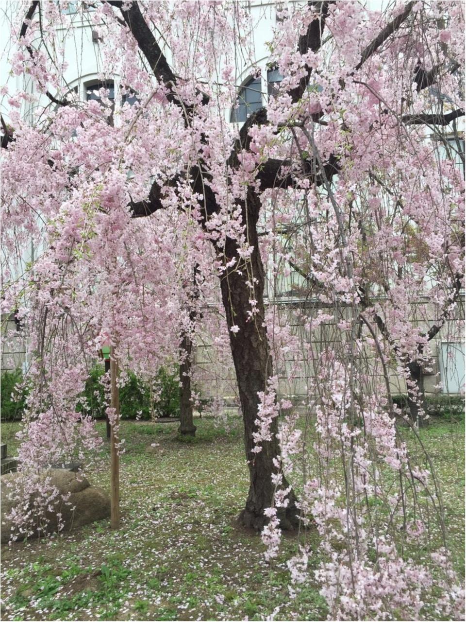 snidel ピンクフラワーBIGトートを持って、春のおでかけ♪_4