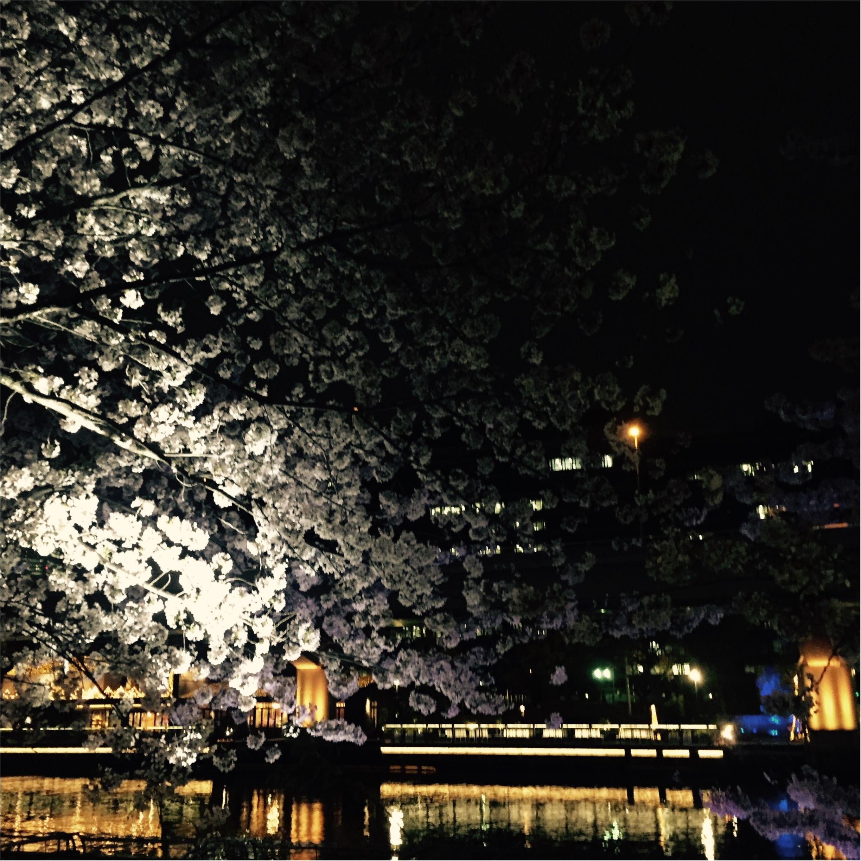 【夜桜見物】大川沿いの桜が満開!川沿いをゆったりお散歩するのがオススメ◎_3