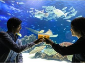 お魚や夜景を愛でながら、はい乾杯! 『サンシャイン水族館』と『SKY CIRCUS サンシャイン 60 展望台』に、ビアガーデンOPEN★