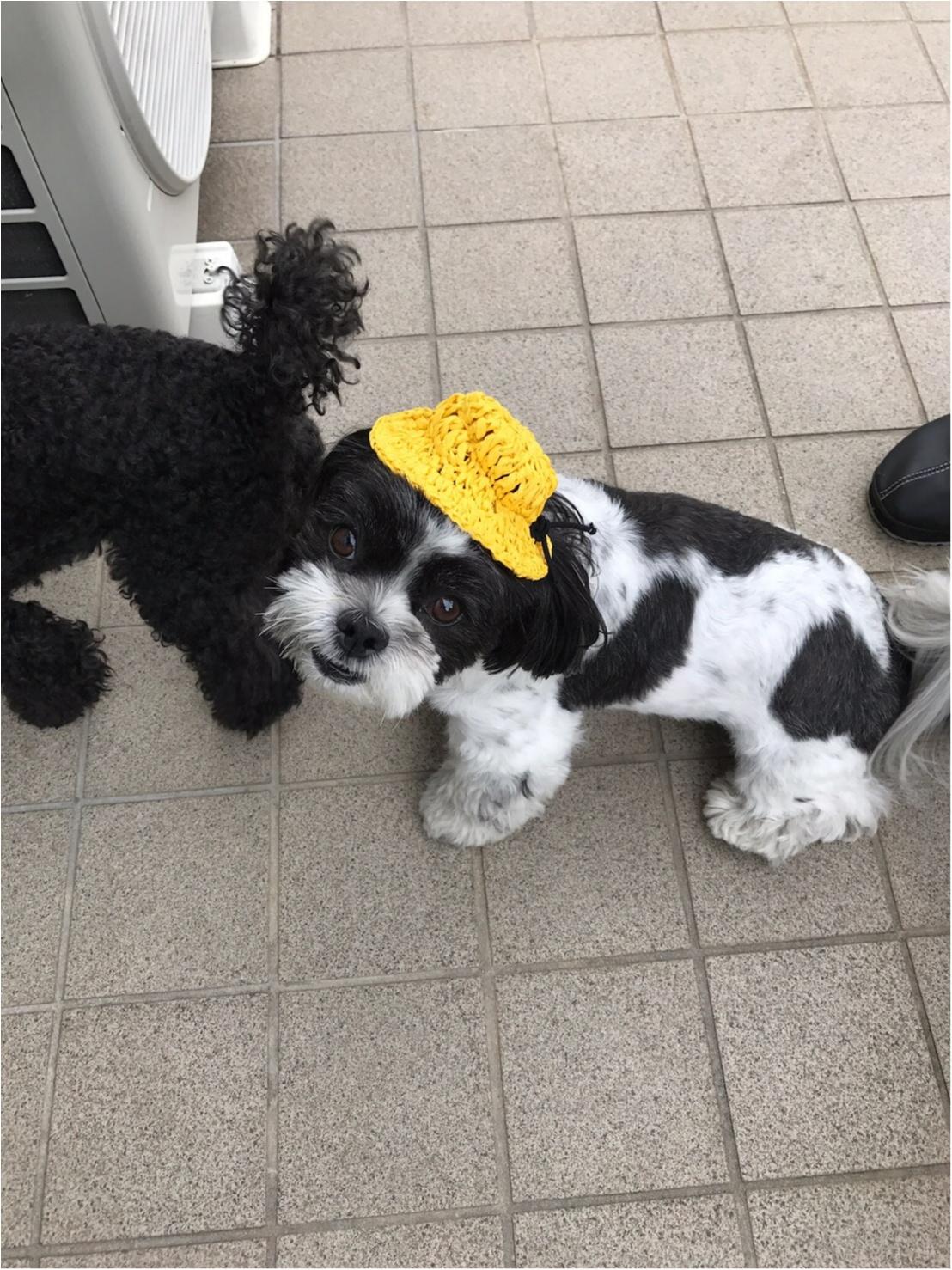 【今日のわんこ】黄色い帽子がGOOD♡ _1