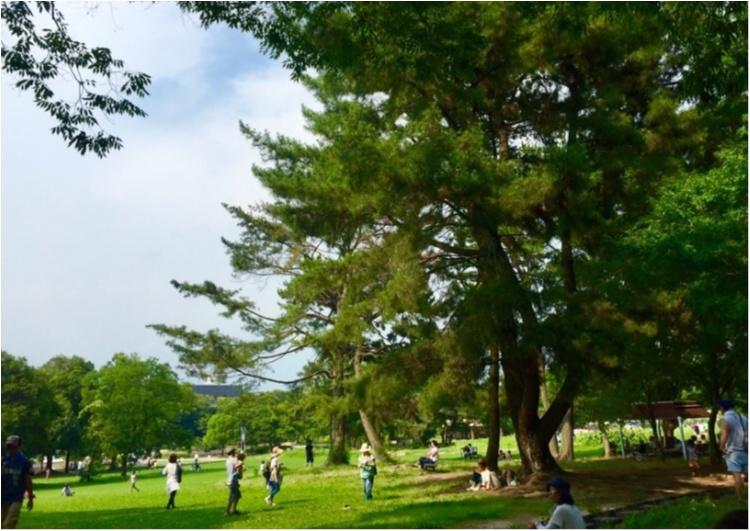 万博公園はピクニック日和!_1