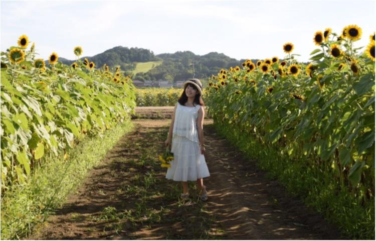 【ジェニ旅】東京ドーム2個分のひまわり畑!! 『益子ひまわり祭』で平成ラストサマーを全力で楽しむ♡_4