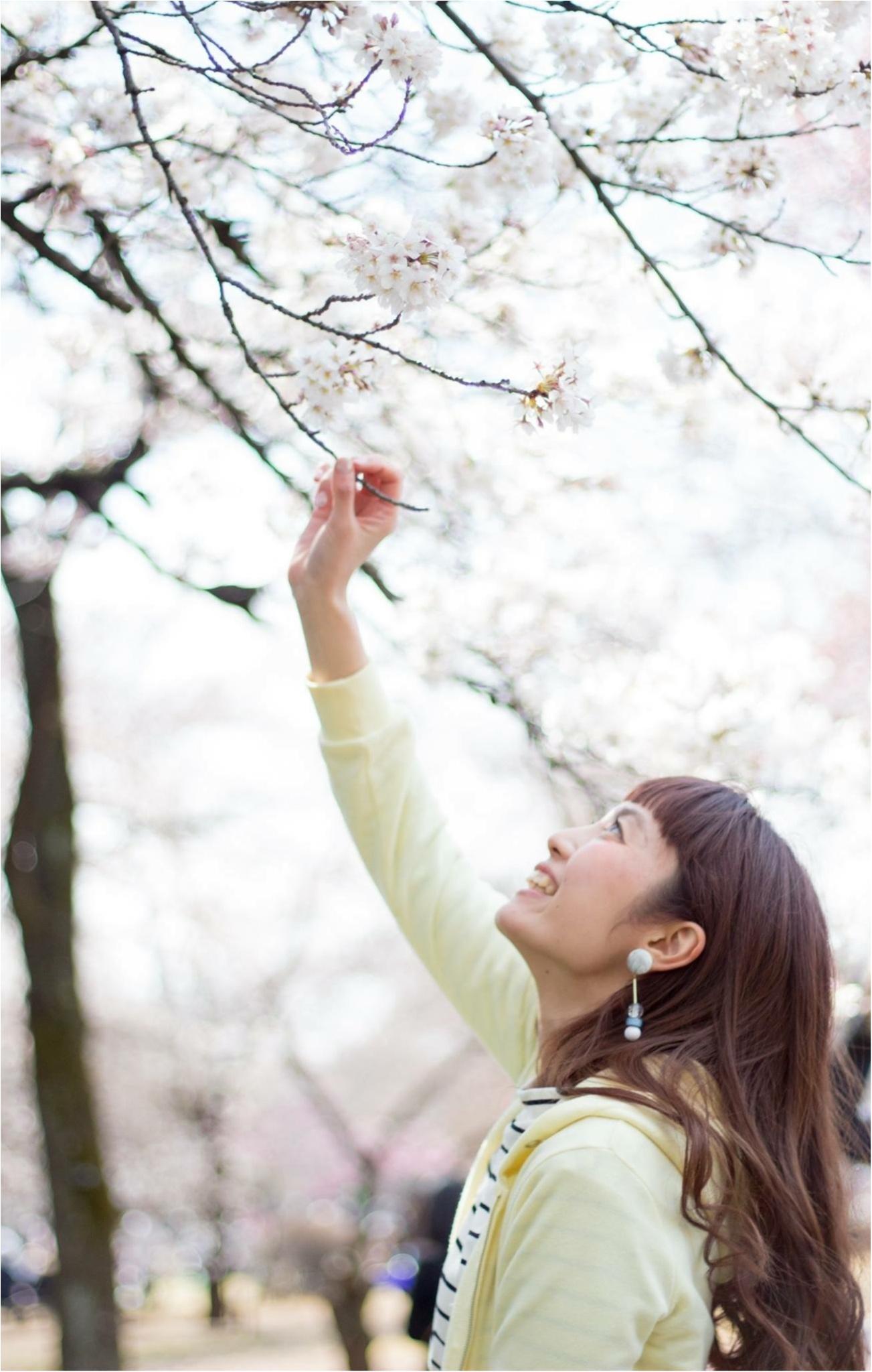 新宿御苑のお花見がゆっくりできるわけ★_4