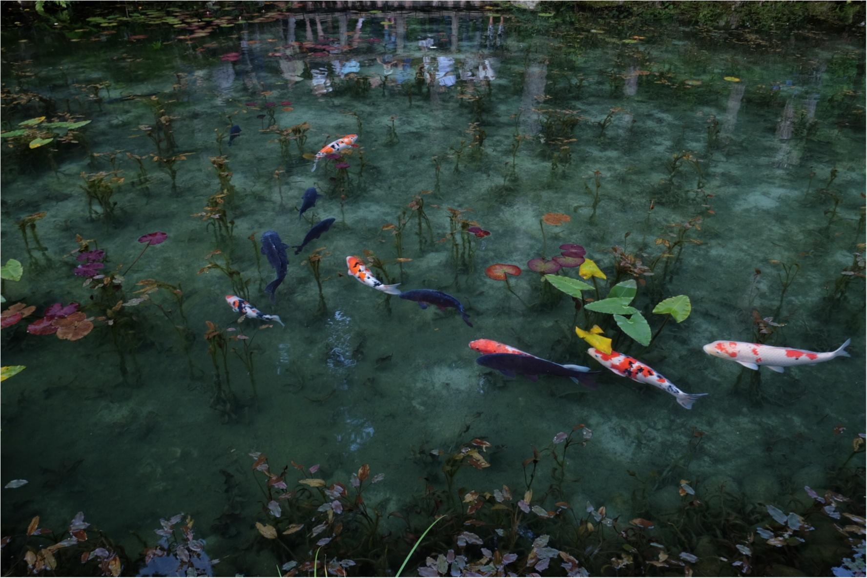 …ஐ オススメスポット✌︎あの【モネの池】が、岐阜県に実在した?! ஐ¨_1