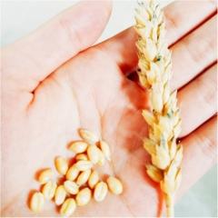 メロン、うに、かに、ほたてといえば?(笑) 小麦研修&グルメ旅【#モアチャレ 農業女子】
