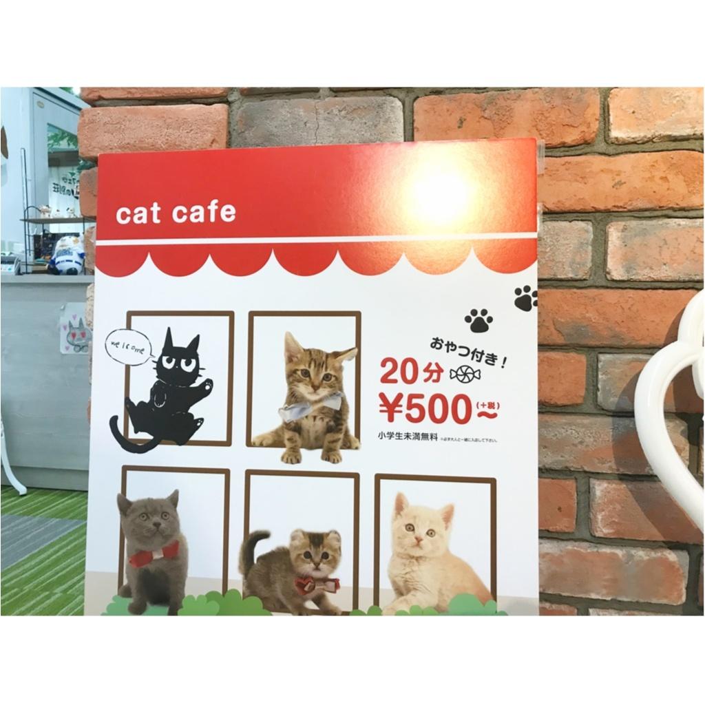 【空前の猫ブーム】首都圏内オススメの猫カフェ教えちゃいます!@横浜店レポ_2