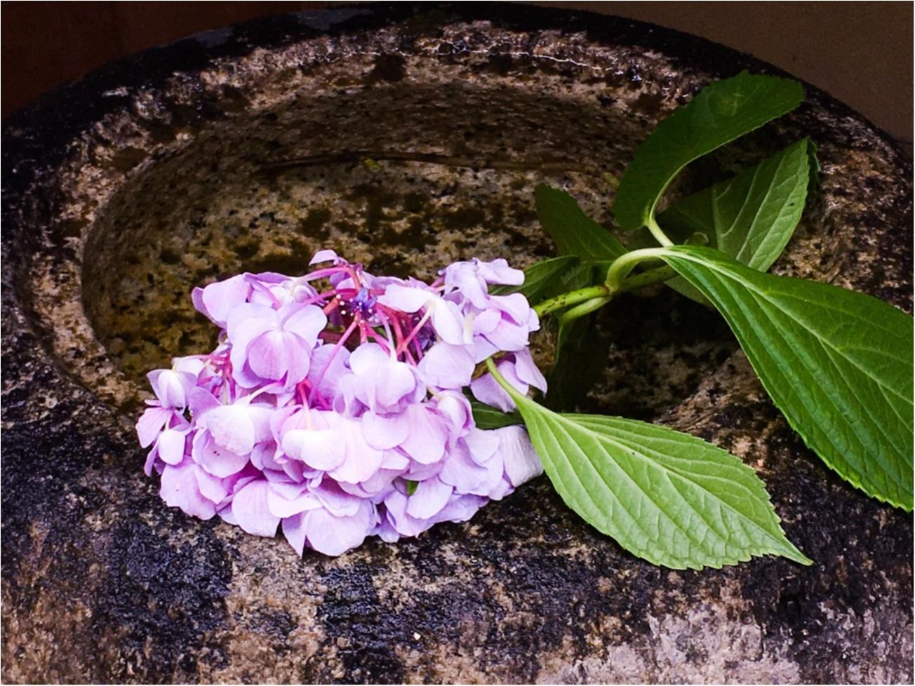 【京都/6月限定】梅雨時期しか食べられないお茶専門店が出す『紫陽花パフェ』を食べよう!_3