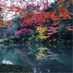 金沢・兼六園の紅葉の美しさにうっとり♡