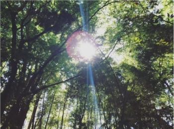 【尾山台・等々力】渋谷から約20分!《等々力渓谷》に行ってきたよ♡