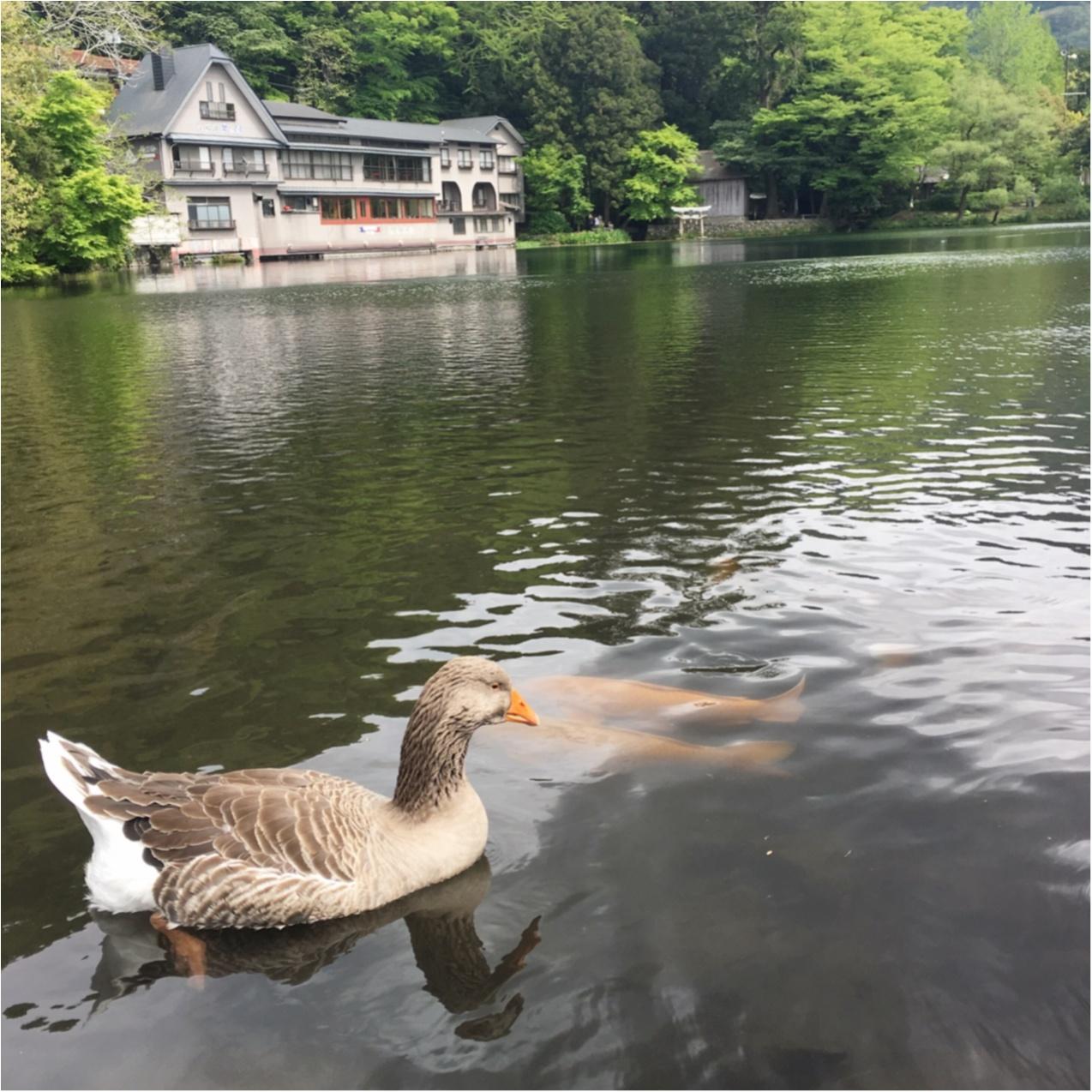 【 湯布院 】オススメ♪湖をながめながらゆっくりできるおしゃれなカフェ♡_2