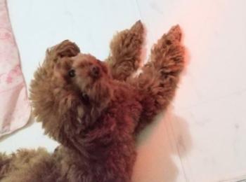 【今日のわんこ】犬だって寒い! 暖房器具のど真ん中を陣取りたいテテちゃん