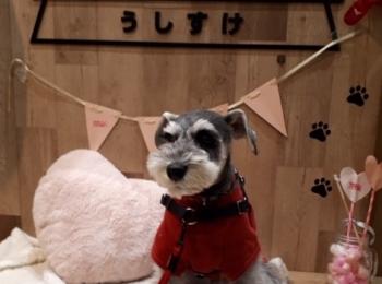 【今日のわんこ】サクラちゃんが、「GRILL&BAR うしすけ」におでかけ☆