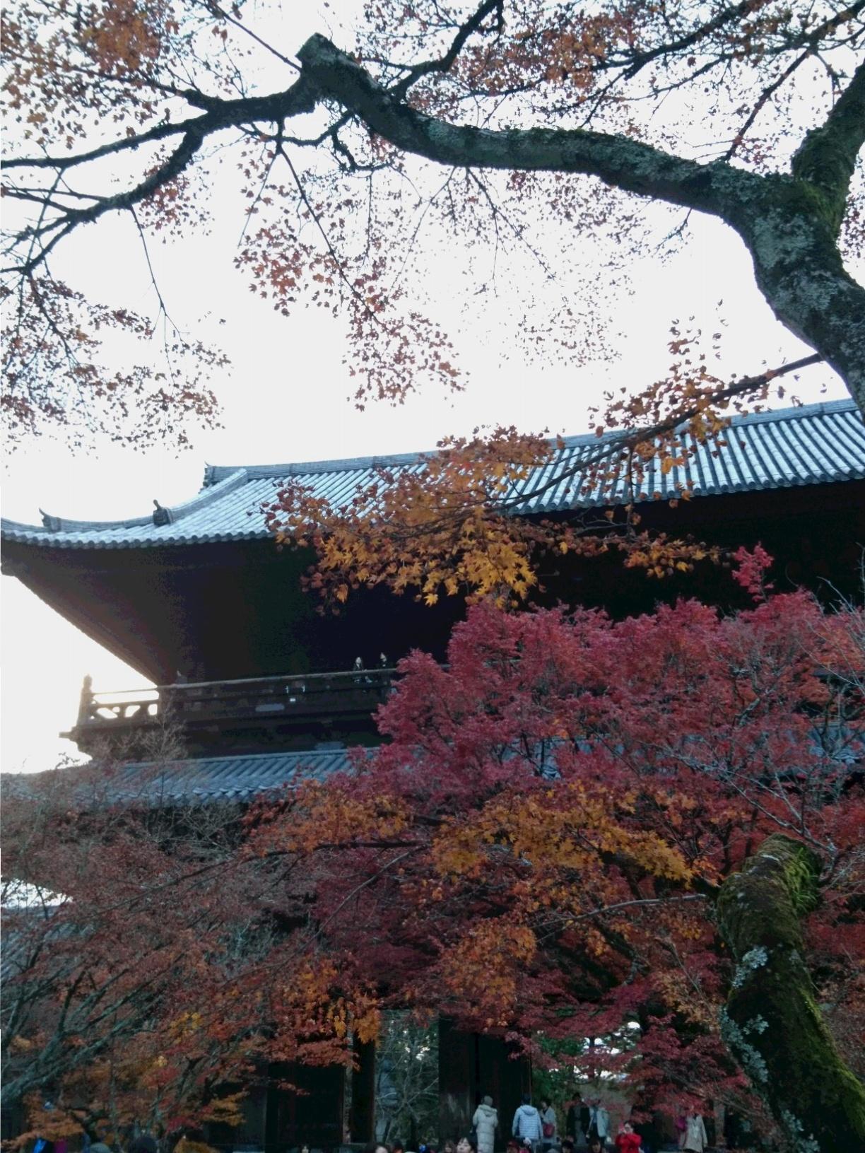 今が見ごろ!関西の紅葉スポット【京都】秋を感じてきました。_1