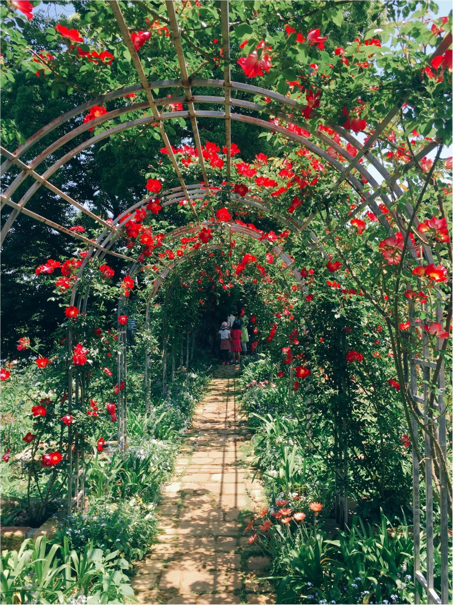 【お出掛けスポットin熱海】今が見頃のローズガーデン!薔薇のトンネルにうっとり…♡_4