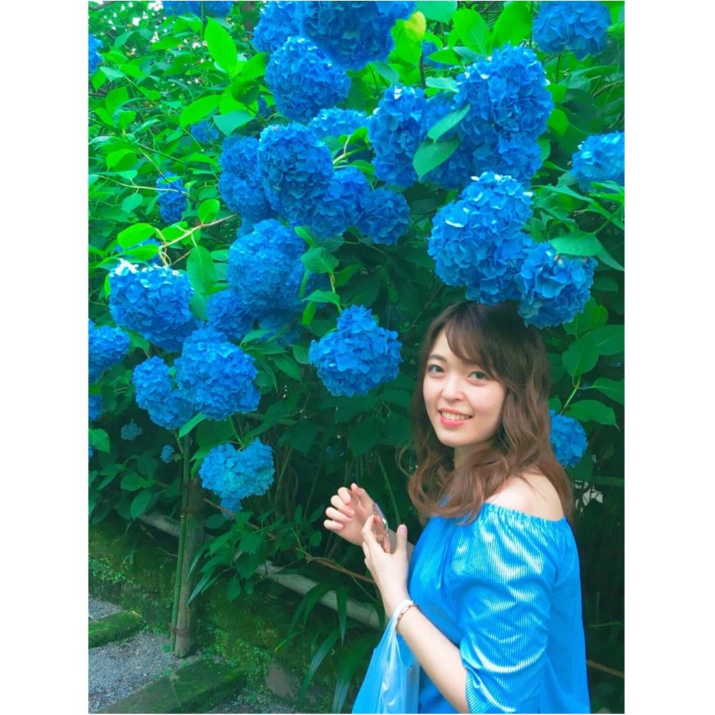 《 鎌倉 》へは今行くのがおすすめ!紫陽花が見頃です ♡_7