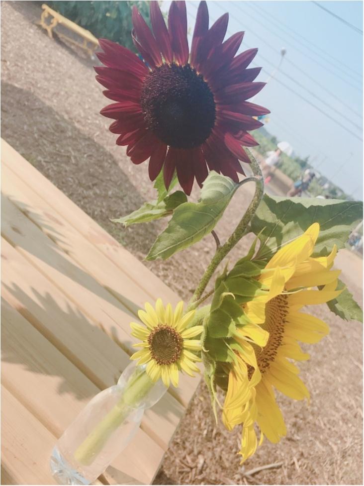 都内にある向日葵畑へ✨_3