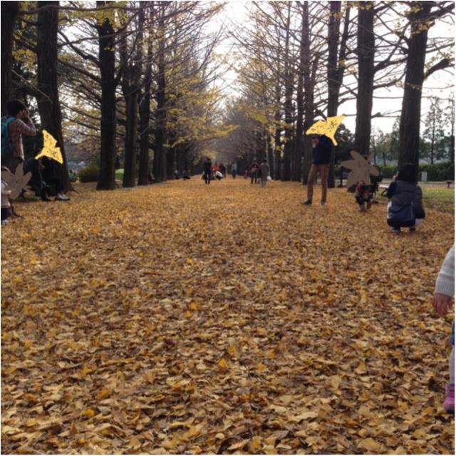 【私がおすすめする紅葉スポット】一度は歩きたい!《イチョウ並木の黄色いじゅうたん》がココにあります!!_4