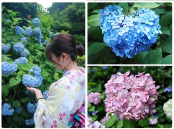 鎌倉の紫陽花名所特集 - 人気のあじさい寺「長谷寺」「名月院」などおすすめスポット
