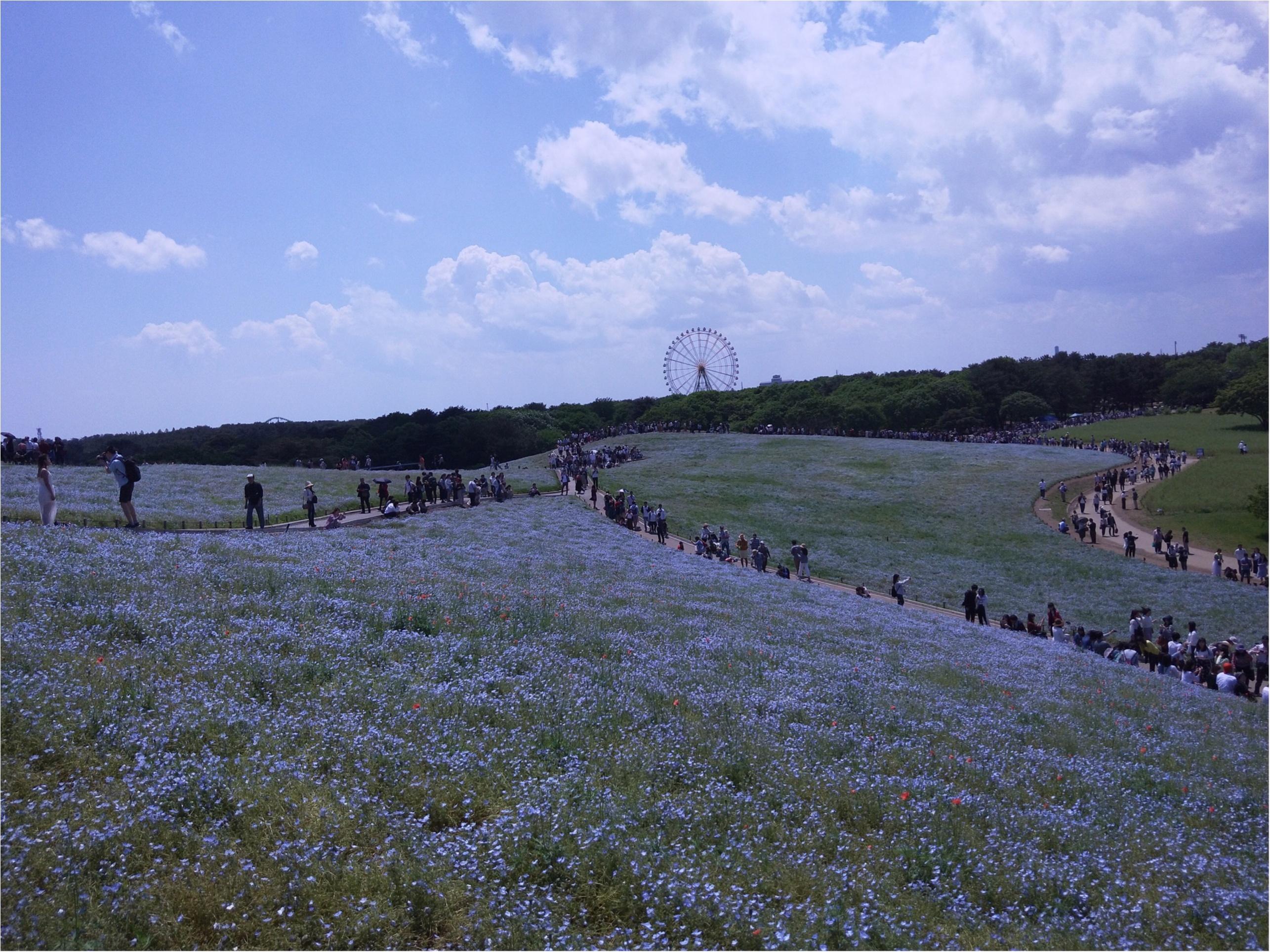 丘一面に広がる青い絨毯「ネモフィラ」観賞と新鮮な海鮮丼を食すバスツアー✨_1_2