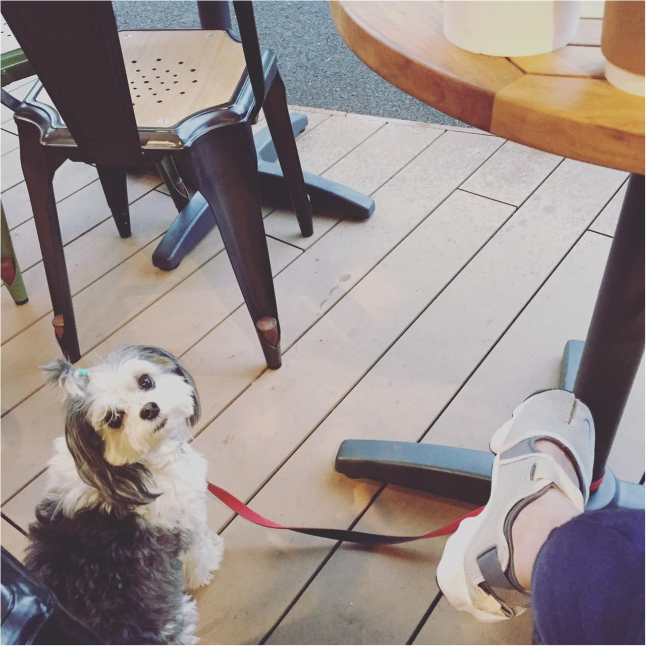 【今日のわんこ】ママと一緒に♡ 太郎くんはオープンカフェでリラックスタイム中_1