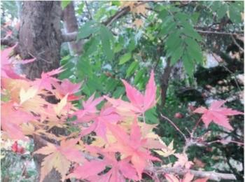 紅葉シーズン!!到来!!北海道の見頃は終わってしまいましたが…公園にいけば、もう少しだけ秋を感じられそうです♡