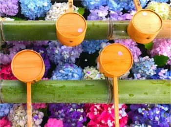 【京都】インスタ映え間違いなし!あじさい祭り♡