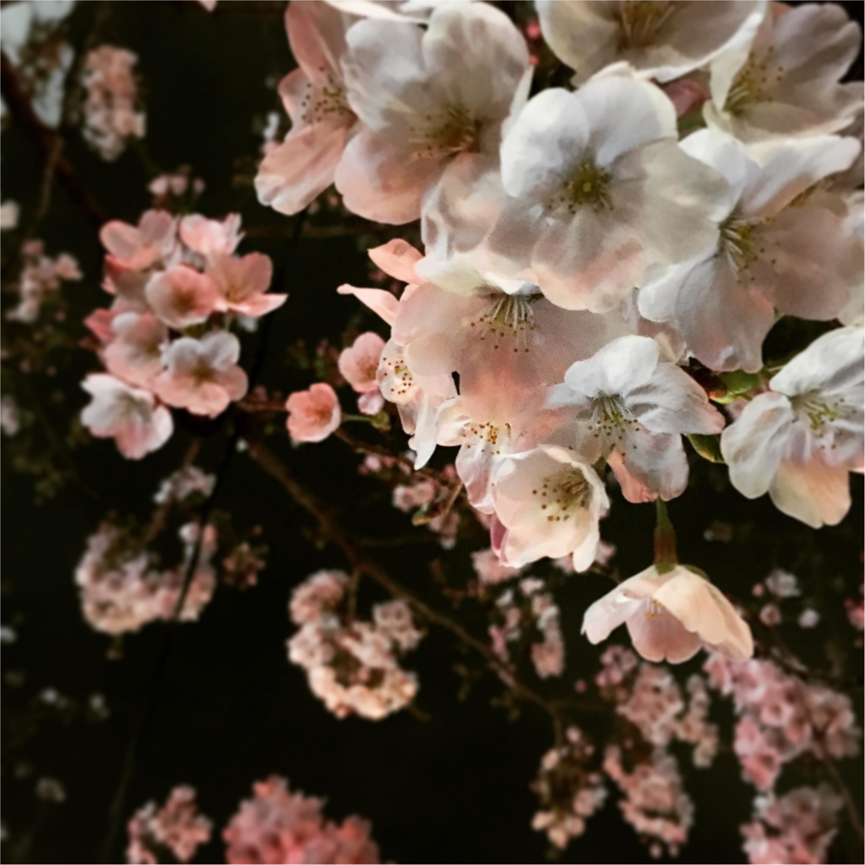 中目黒で夜桜みてきたよ( ^ω^ )_1