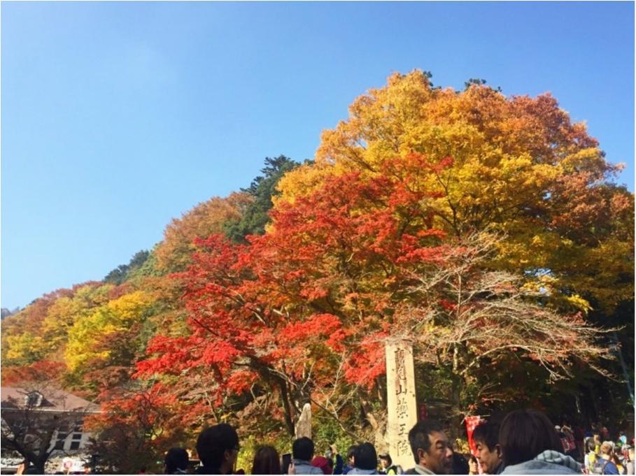 【しの散歩】世界一登山客が多い山!東京の紅葉スポットといえば、やっぱり『高尾山』がおすすめ♪_1