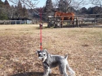 【今日のわんこ】お馬さんを背景に、ハイチーズ☆ なサクラちゃん