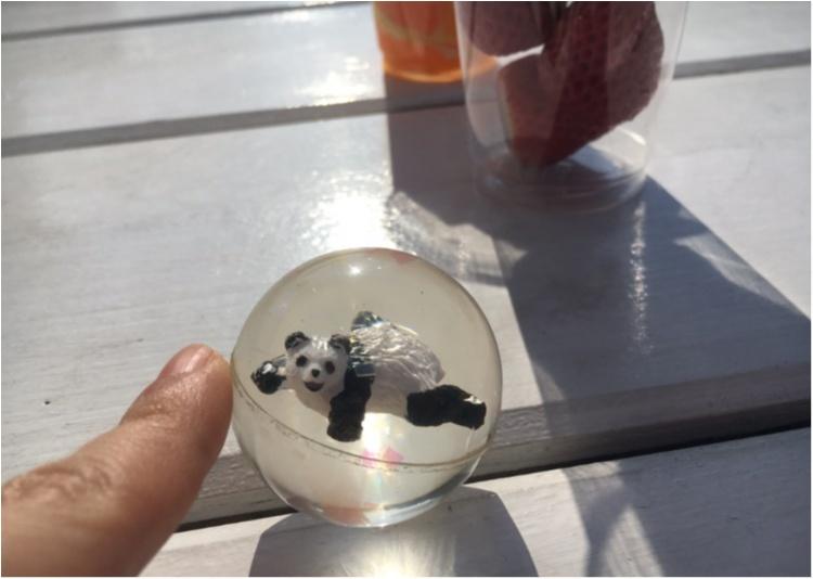 【8/10まで!!】チャンスは今だけ!上野動物園の赤ちゃんパンダの名付け親になっちゃおう♡♡_1
